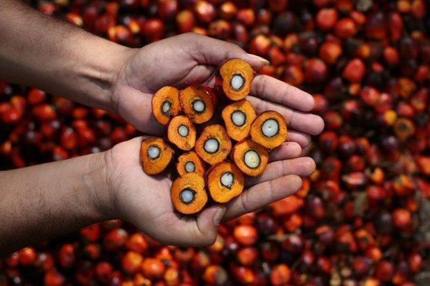 صادرات روغن پالم مالزی به ایران دوبرابر شده است