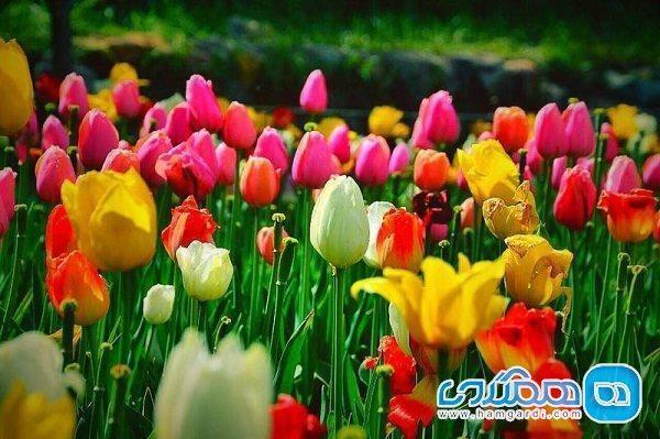 سفر به زیباترین دشت های پرگل ایران ، مقاصدی پر گل و مشهور