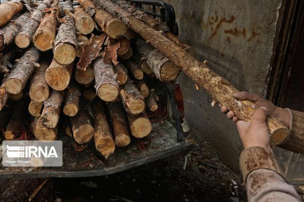 خبرنگاران سامانه بهره برداری و حمل چوب در لرستان راه اندازی شد