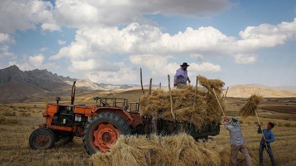 خرید 300 هزار تن گندم با قیمت تضمینی تا 4 اردیبهشت ماه