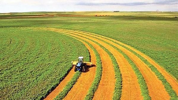 فراوری سالانه بیش از پنج میلیون و 57 هزار تن محصولات کشاورزی در کرمانشاه